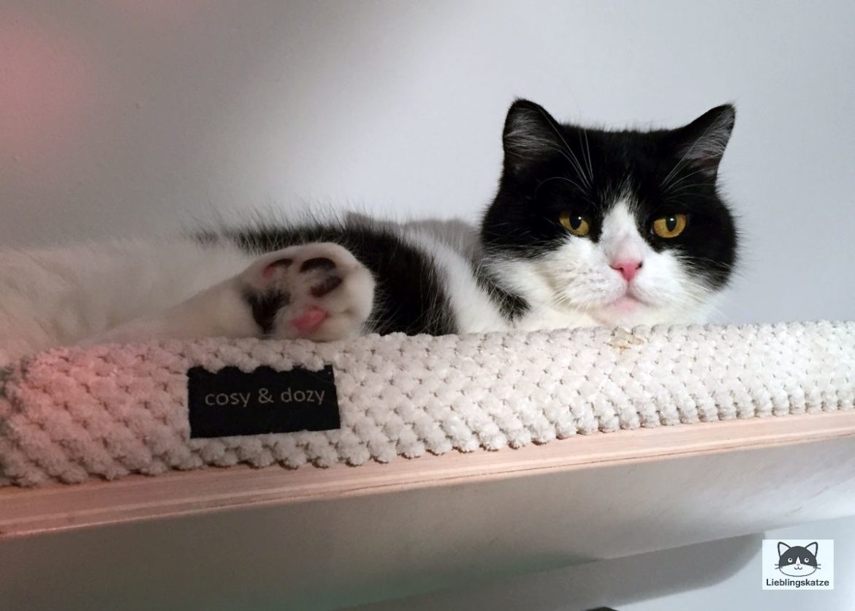 Katzensprache: Katze auf Wandliege