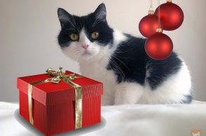 Katze mit Weihnachtsgeschenk