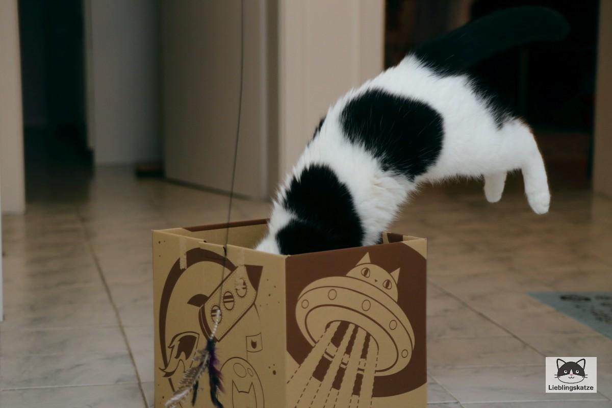 Katze springt in Karton