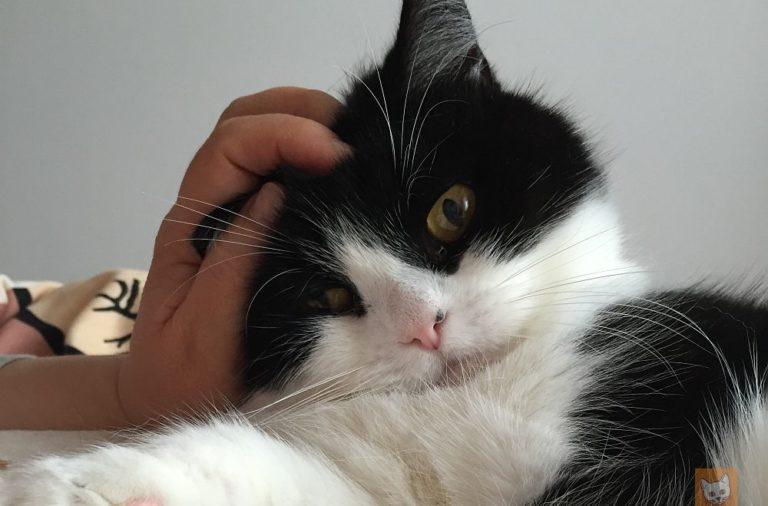 Katzen richtig streicheln