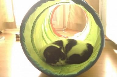 Katze im Spieltunnel