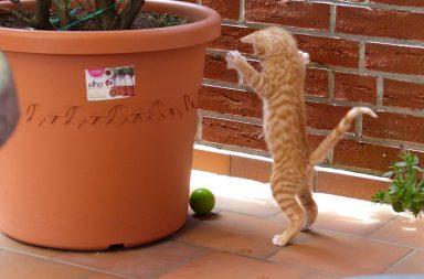 Kätzchen mit Ball