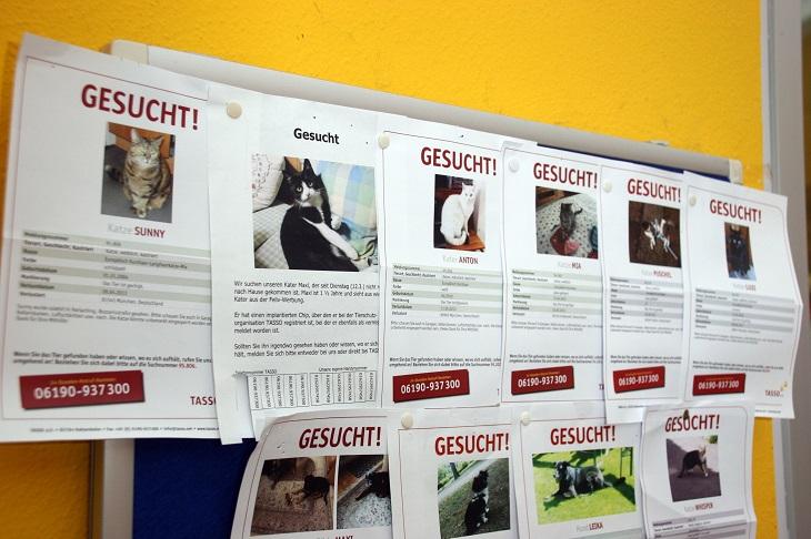 Plakate mit vermissten Katzen