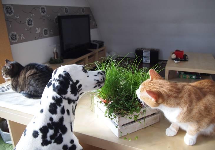 Hund und Katze knabbern Pflanzen an