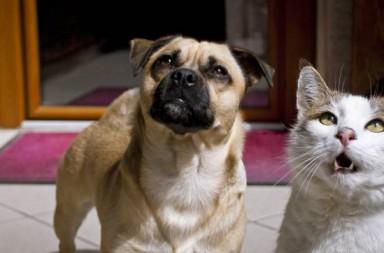 Hund Rocco und Kater Gonzo