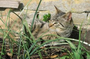 Garten katzensicher: Freigänger