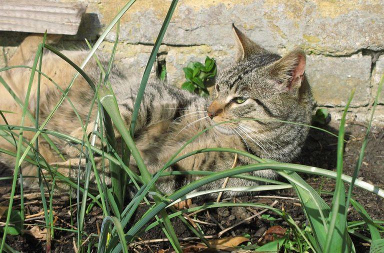 Sechs Tipps für einen katzensicheren Garten
