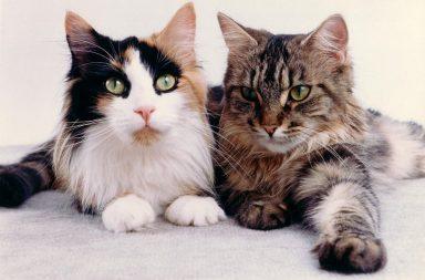 Katzenhaltung Recht: Zwei Katzen