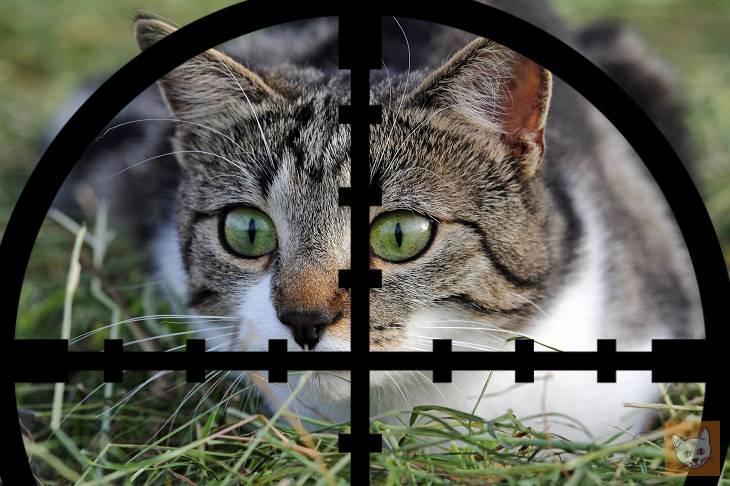 Katze im Fadenkreuz