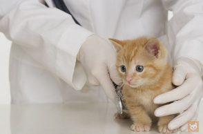 Kätzchen beim Tierarzt