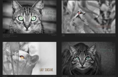 Tiertafel Katzenkalender 2018