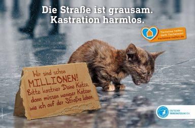 Kampagnenmotiv Katzenkastration: Kitten auf Straße