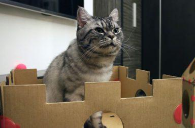 Katze in Turm aus Karton von Box Kitty