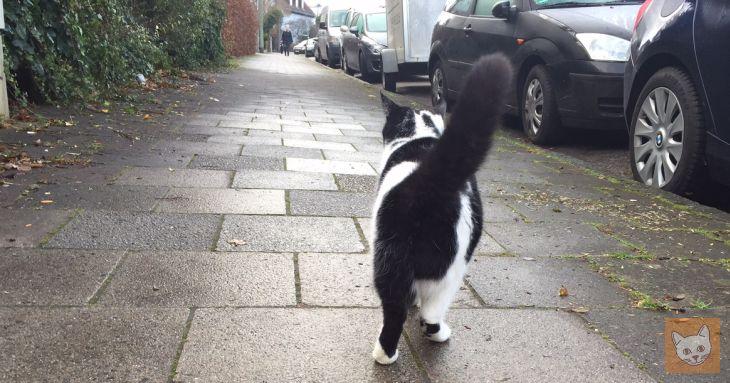 Katze auf Fußweg