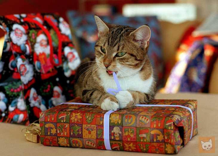 zehn tolle weihnachtsgeschenke f r katzen lieblingskatze. Black Bedroom Furniture Sets. Home Design Ideas