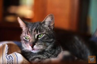 Katze auf Decke