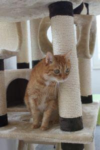 Katze im Katzendorf