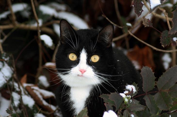 Katze im Winter