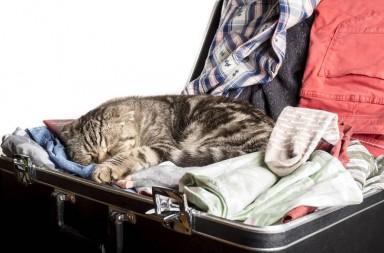 Katze schläft im Koffer