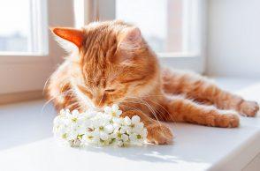 Katze riecht an Blüten