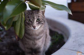 Blumentopfschutz: Katze im Blumentopf