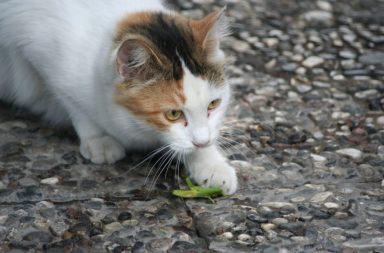 Katze mit Grashüpfer