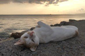 Welttierschutztag 2019: Katze am Meer