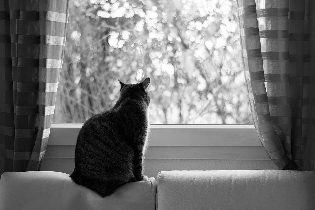 Katzen in der Mietwohnung