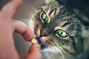 Katze bekommt Tablette