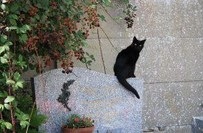 Schwarze Katze auf Grab