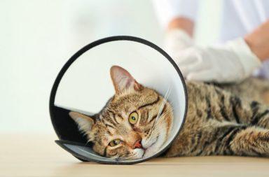 Katze mit Schutzkragen