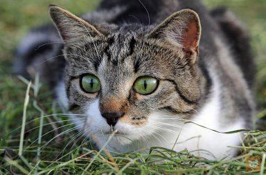 Katze lauert im Gras