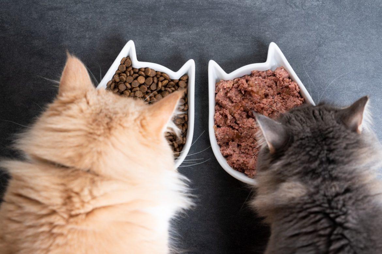 Nassfutter und Trockenfutter