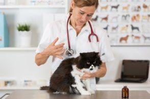 AGILA Katzenhalterumfrage Tierärztin