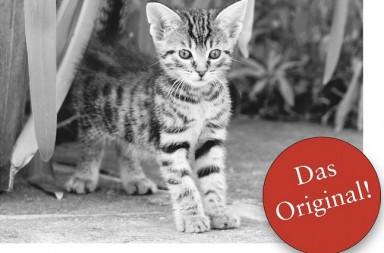 Katzenkalender (Auschnitt)