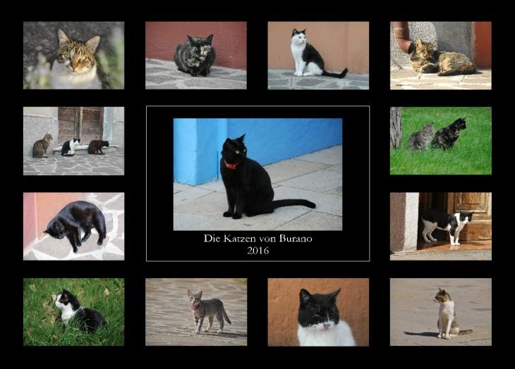 """Katzenkalender """"Die Katzen von Burano 2016"""" - Übersicht"""