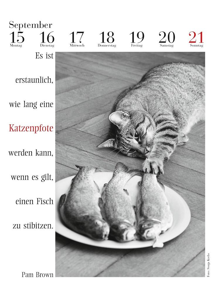 Katzenkalender Innenseite