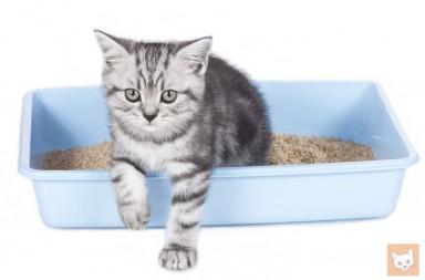 Unsauberkeit bei Katzen - Katzenklo