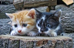 2 junge Kätzchen -Katzennamen 2019