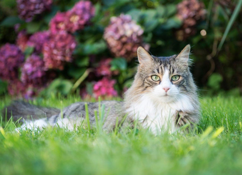 Katzennamen: Katze liegt in Wiese