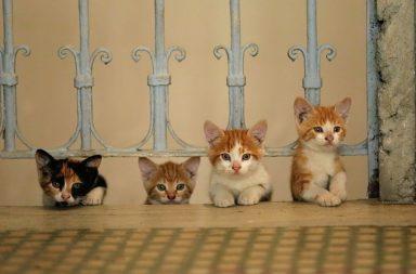 Kedi: Vier kleine Kätzchen
