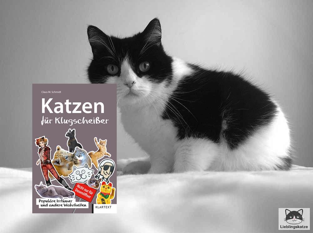 Katzen für Klugscheißer