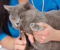 Tierärztin schneidet Katze Krallen