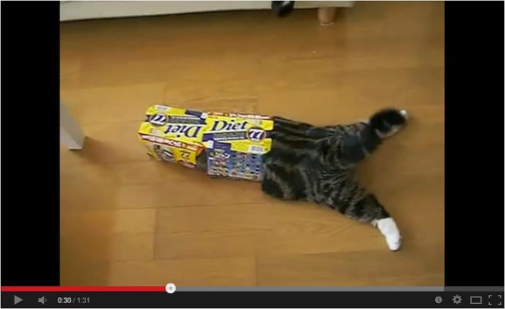Maru The Cat Box Slide