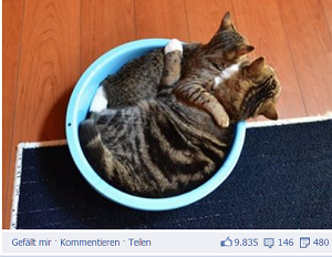 Maru und Hana auf Facebook