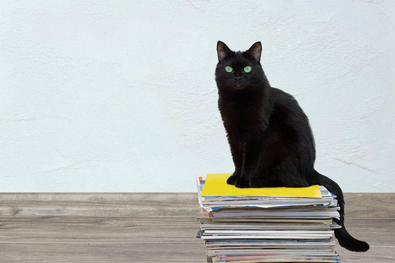 Katze auf Zeitungsstapel