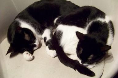 Die Katzen OZ und Ellie
