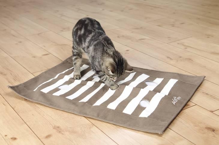 Katze mit Pföteldecke