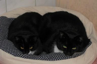 Die Katzen Pia und Pranko