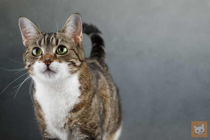 Scheidung: Was geschieht mit der Katze?